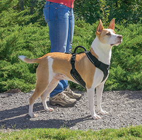 Easy Walk - Easy Sport Harness Köpek Tasması Medium (56-76 cm)