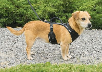 Easy Walk - Easy Sport Harness Köpek Tasması X Small